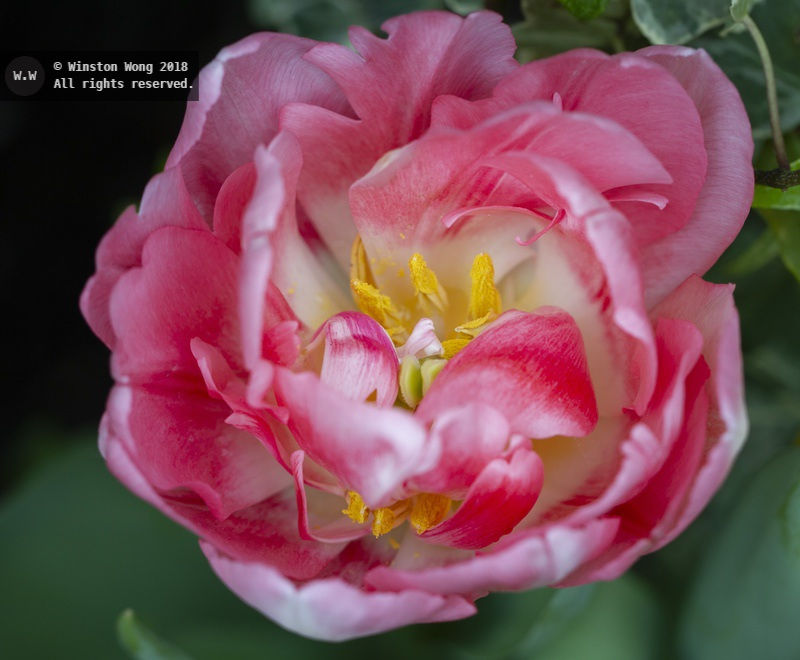 flora0056.jpg