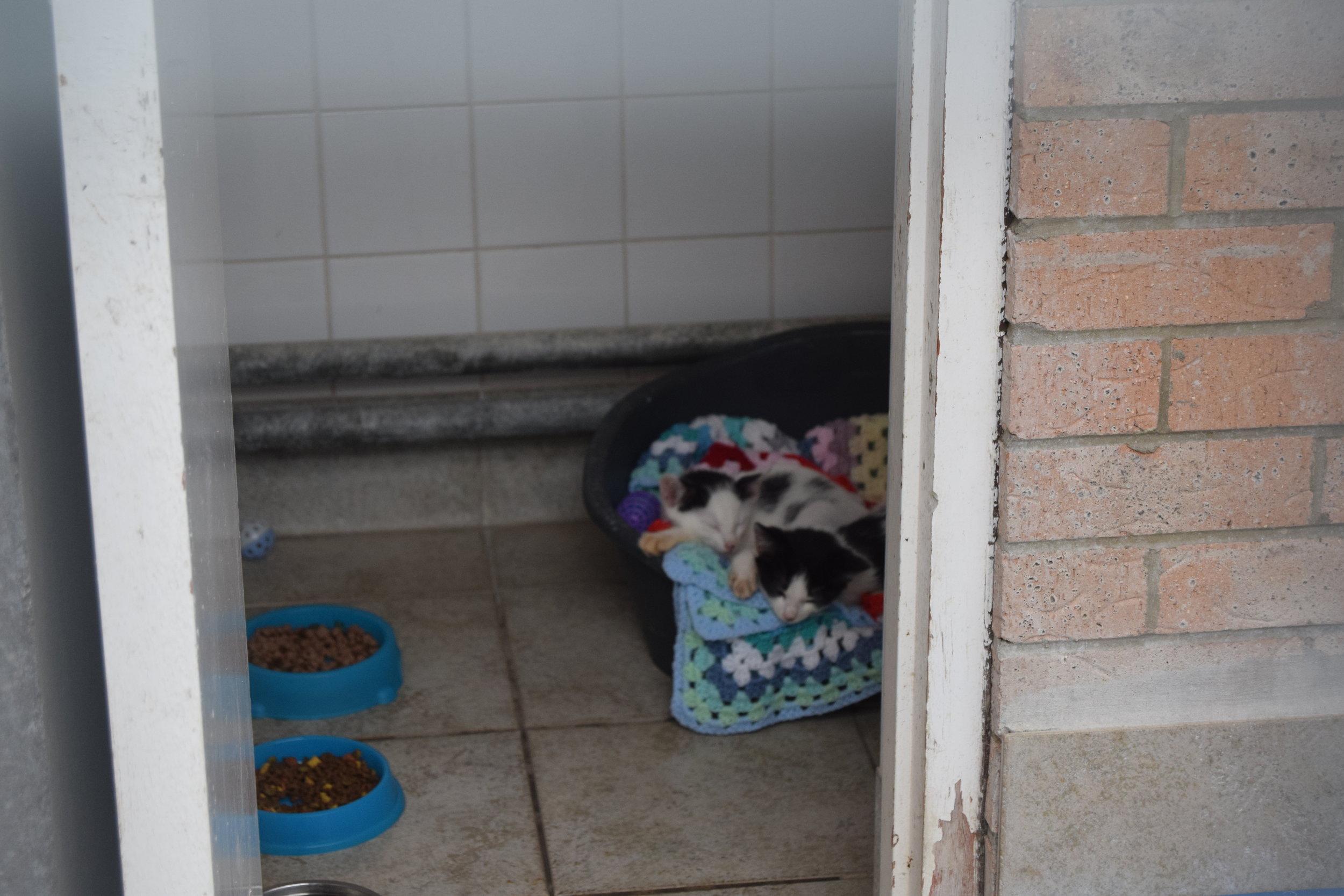koast radio newcastle cat dog shelter