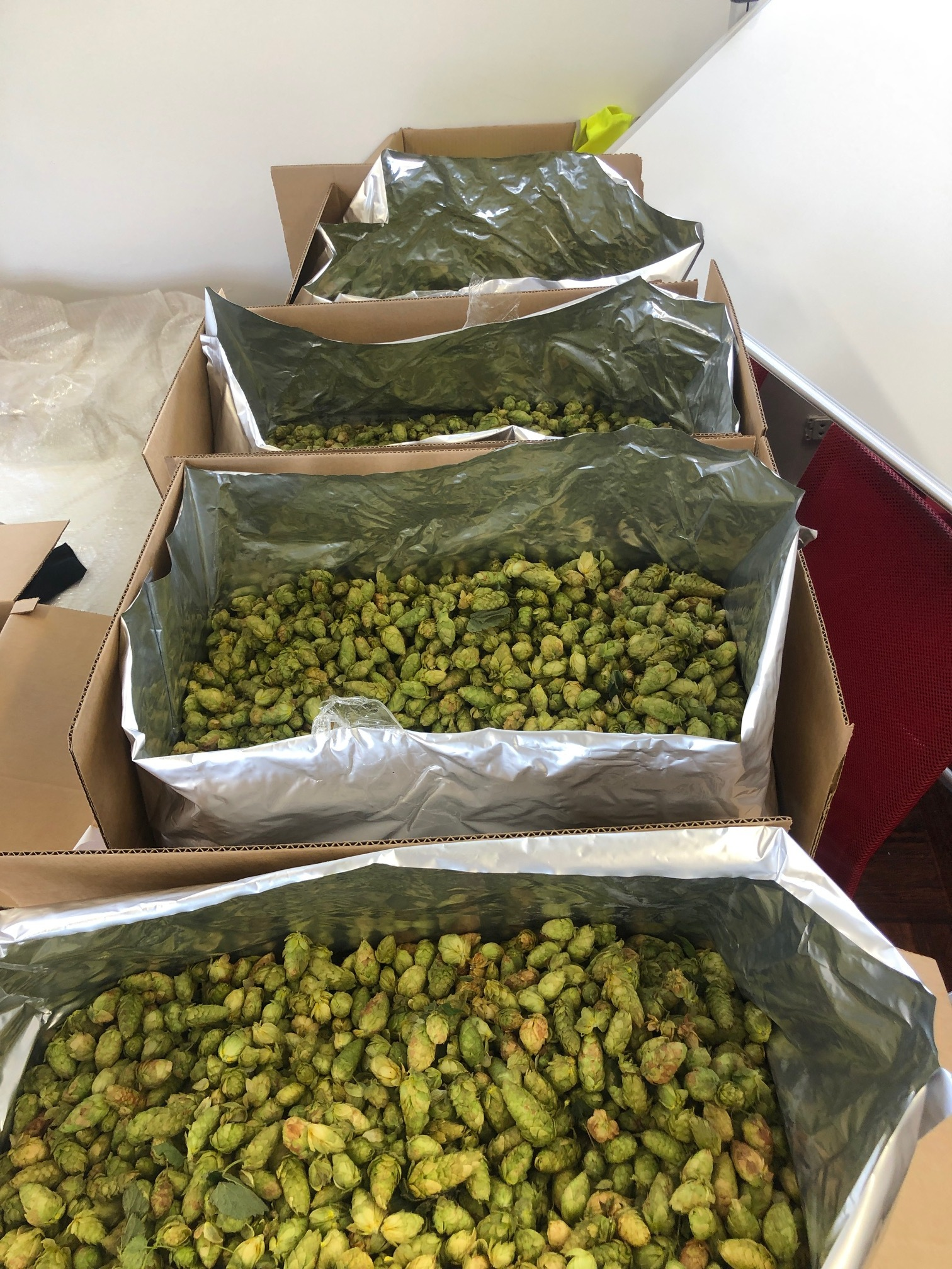 60kg of Fresh Ella hops from T