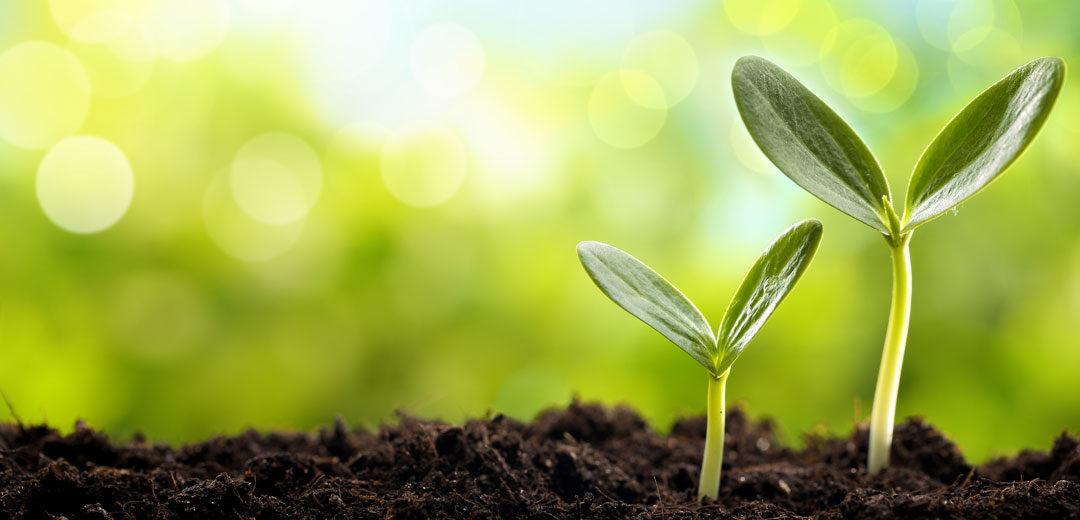 planting-seeds-1080x520.jpg