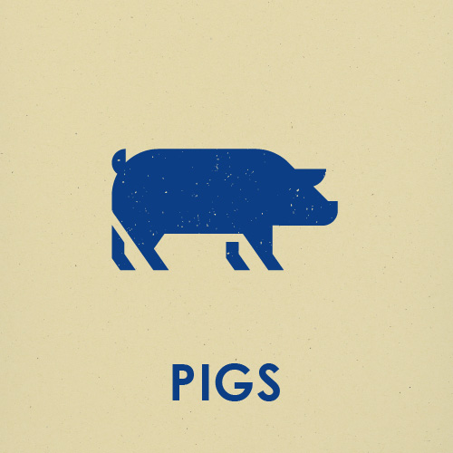 PIG PROCESSING FEES    Less than 210 lbs:   1 to 4 pigs - $80 per head 5 to 9 pigs - $75 per head 10 to 15 pigs - $70 per head Over 15 pigs - $65 per head   210-399 lbs:   1 to 4 pigs - $90 per head 5 to 9 pigs - $85 per head 10 to 15 pigs - $80 per head Over 15 pigs - $75 per head   400 lbs+   $150 per head   BBQ pigs less than 150 lbs - $90 BBQ pigs larger than 150 lbs - $100 *Coloured pigs + $10 per head