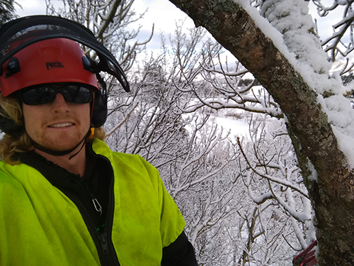 Andrew Smyth - I am a qualified arborist and a member of the NZ Arboriculture Association. This keeps me up to date with the latest climbing techniques and safety protocols. Plus I compete in the annual arborist climbing competitions.