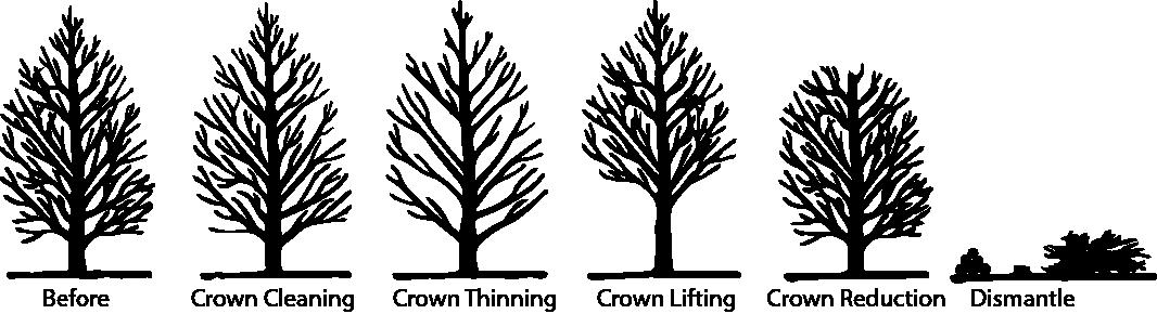 tree surgeon pruning types 01.png