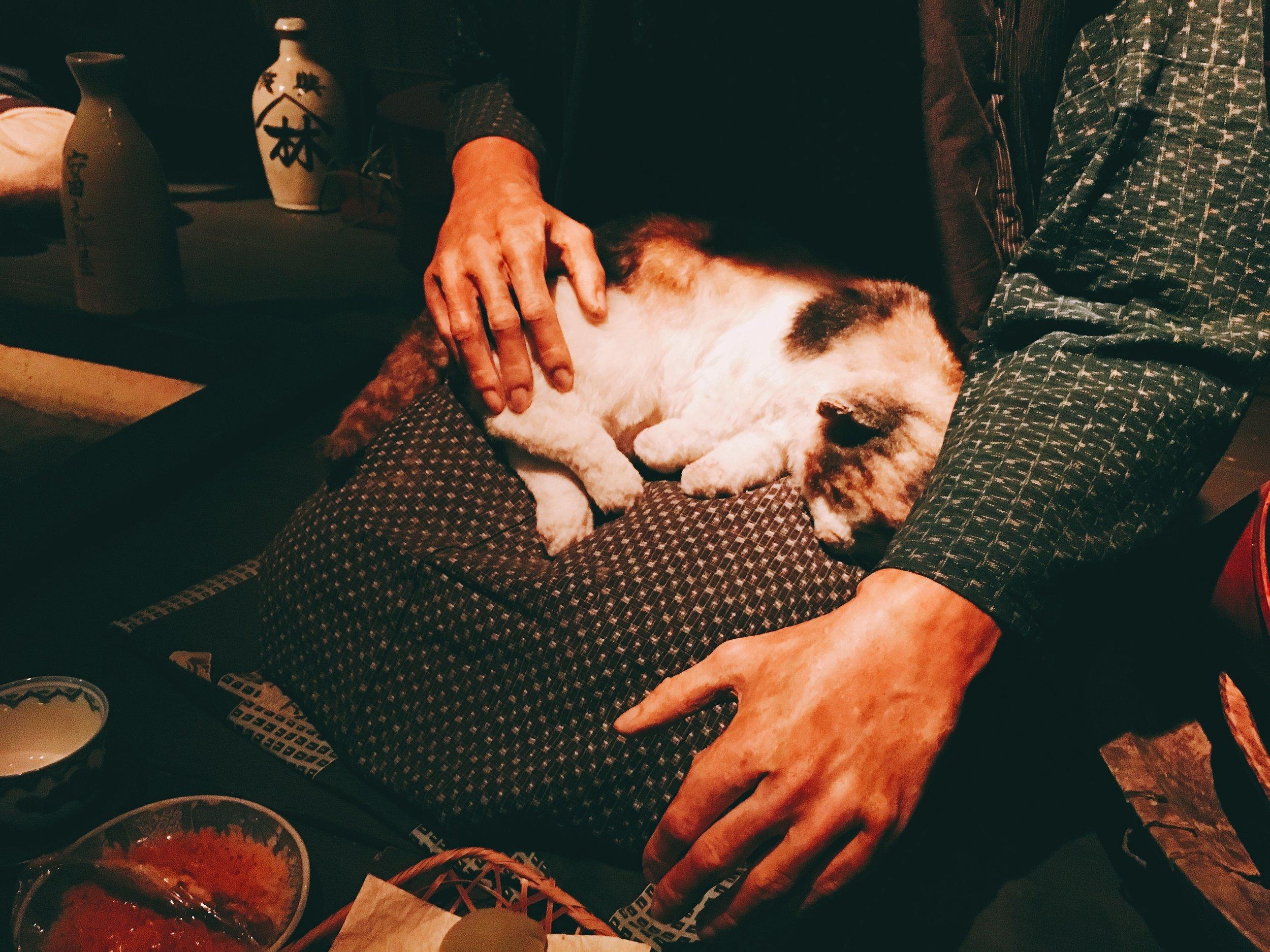 おばあちゃんの膝で寝る猫