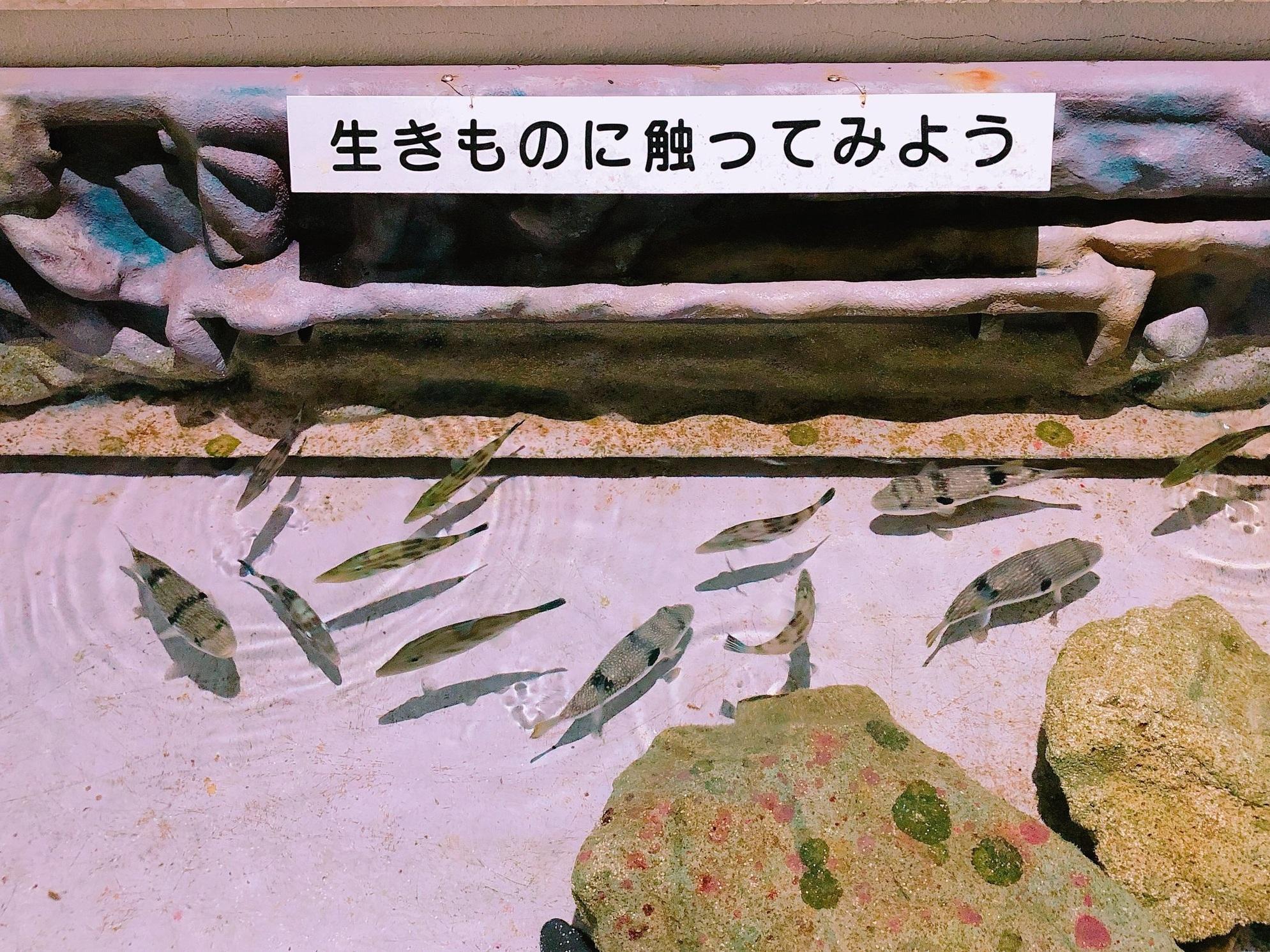 尖閣湾揚島遊園の水族館・魚たち