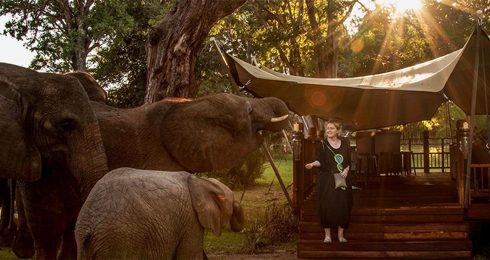 via Elephant Cafe