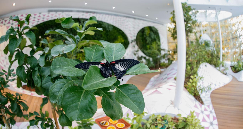 Al Noor Island Butterfly House