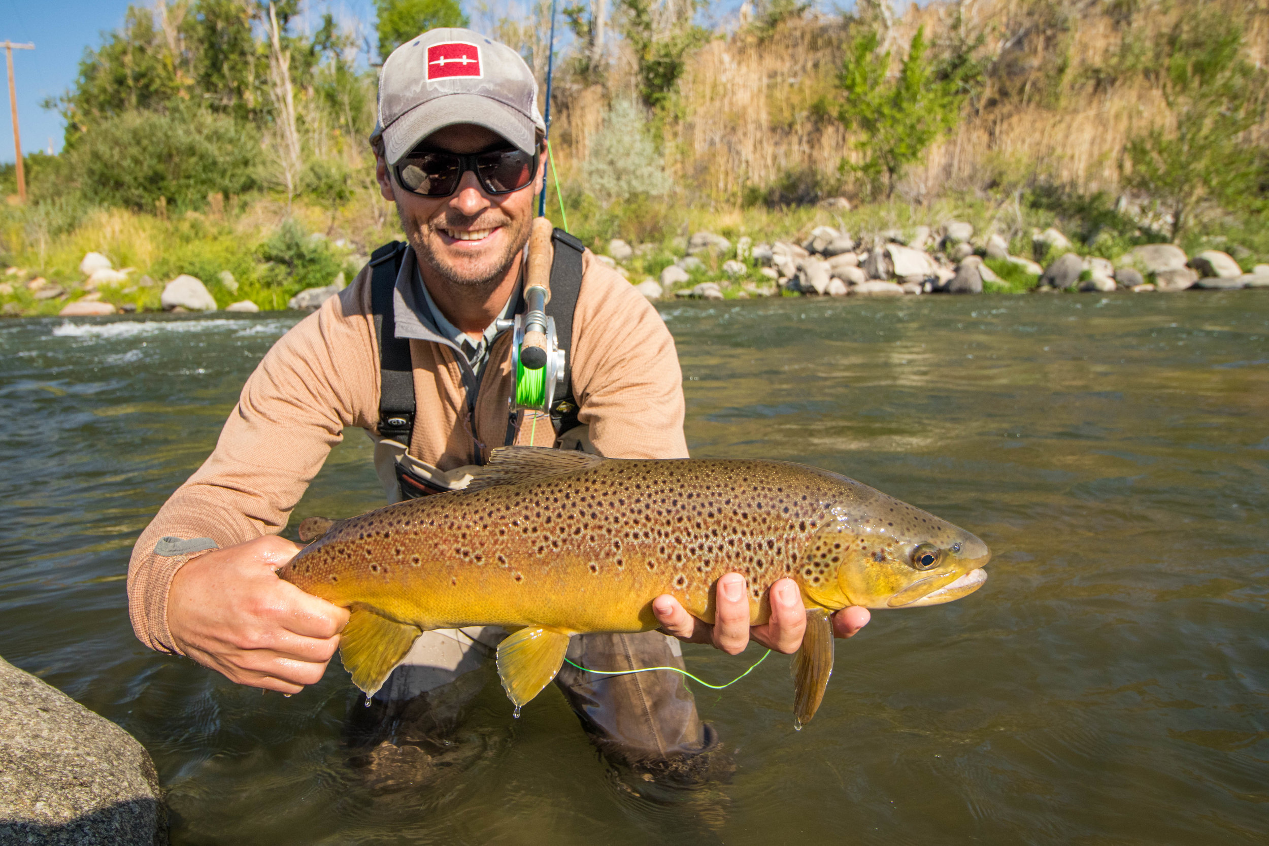 Wild Brown Trout Truckee River