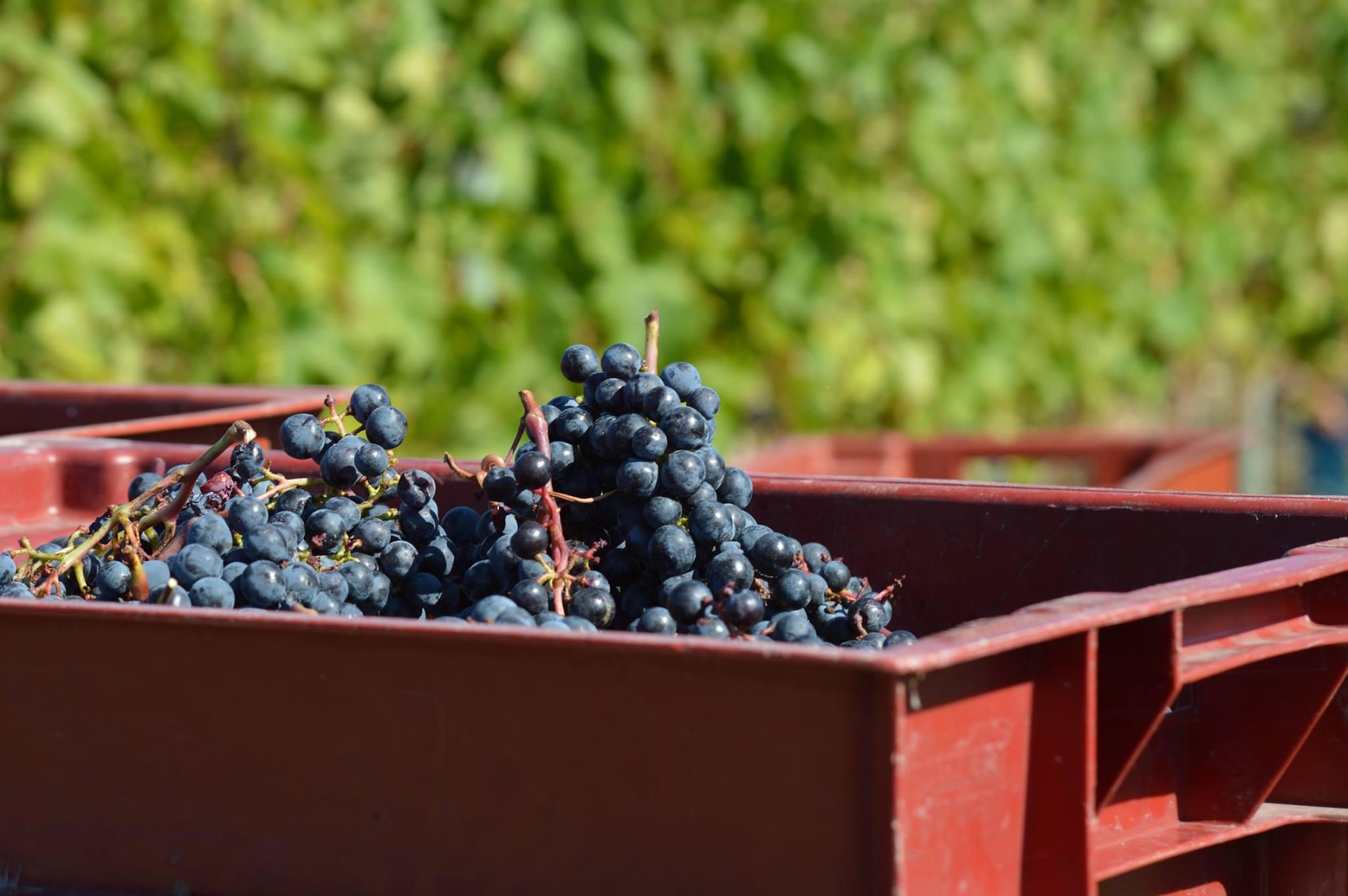 8 wijnproducenten