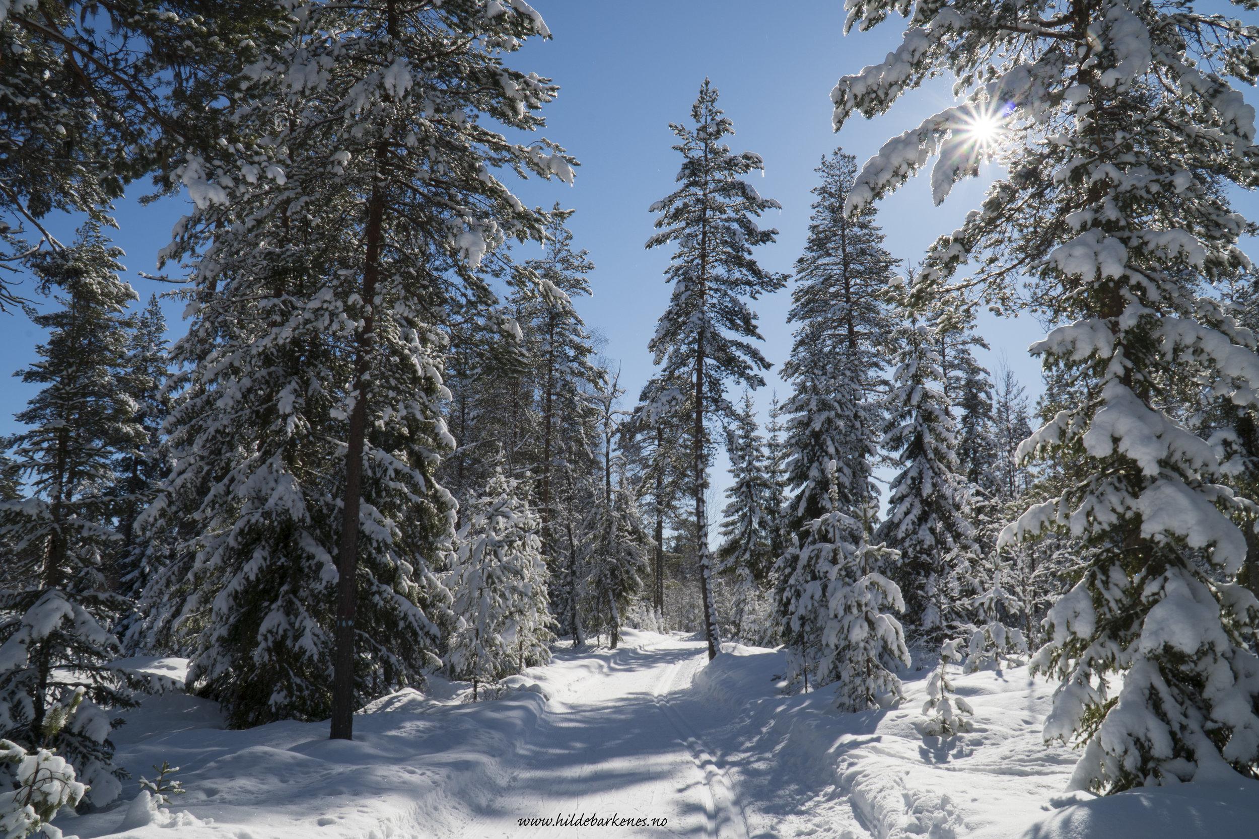 Vintermagi - Her var det bare å rigge seg til i alle mulige vinkler og posisjoner og skyte kamera rett til værs. Lykken finnes, dere. Her ute. Høyt og lavt!