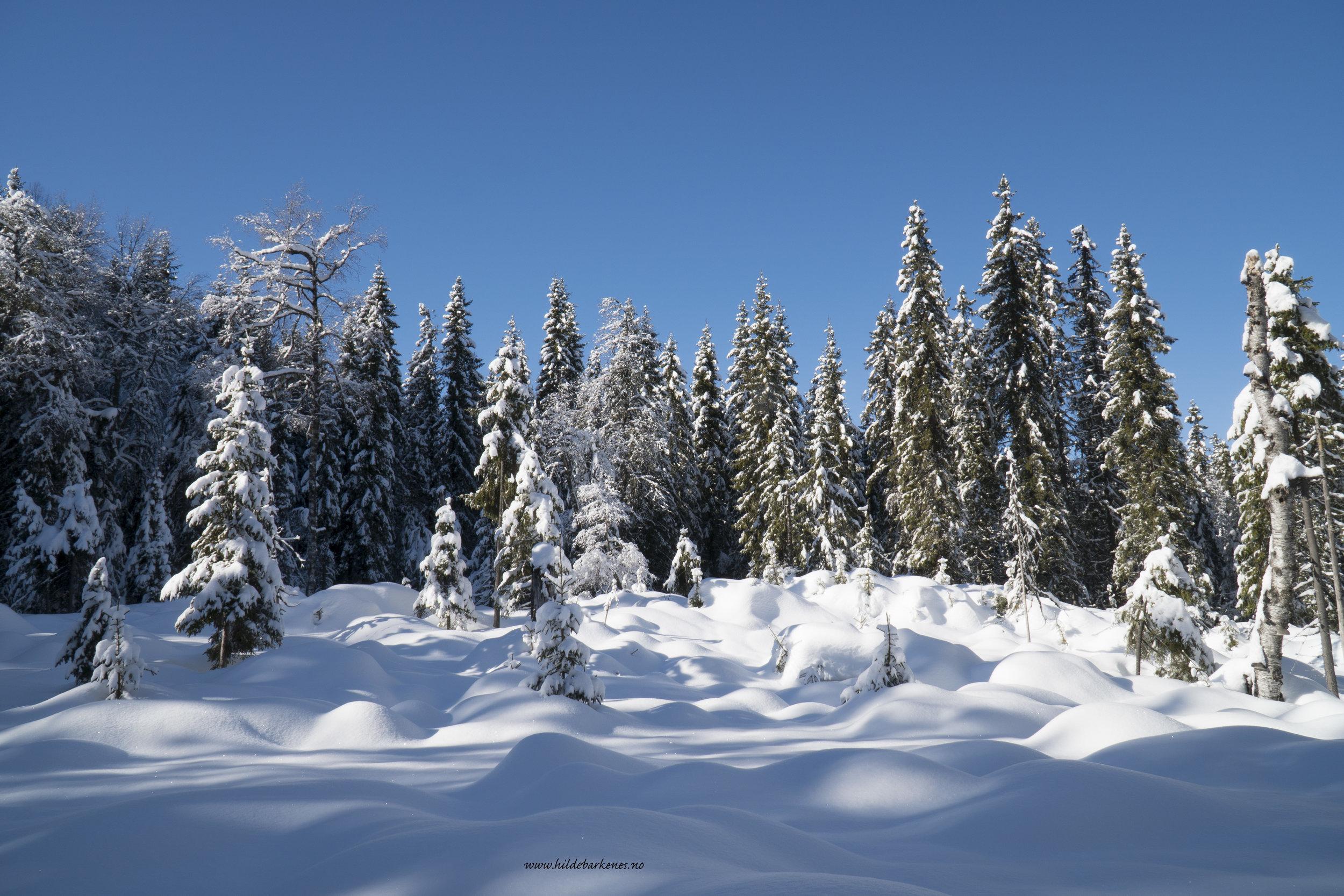 Motiv i alle retninger - Vinteren er nok en favoritt når det kommer til årstider. Egentlig er alle årstider en favoritt…tenk å være så heldig å like alt! Uten skimuligheter på vinteren ville jeg blitt et ulykkelig menneske. Jeg får vondt i magen av å tenke på klimaendringene som sakte men sikkert tar fra oss snøen.
