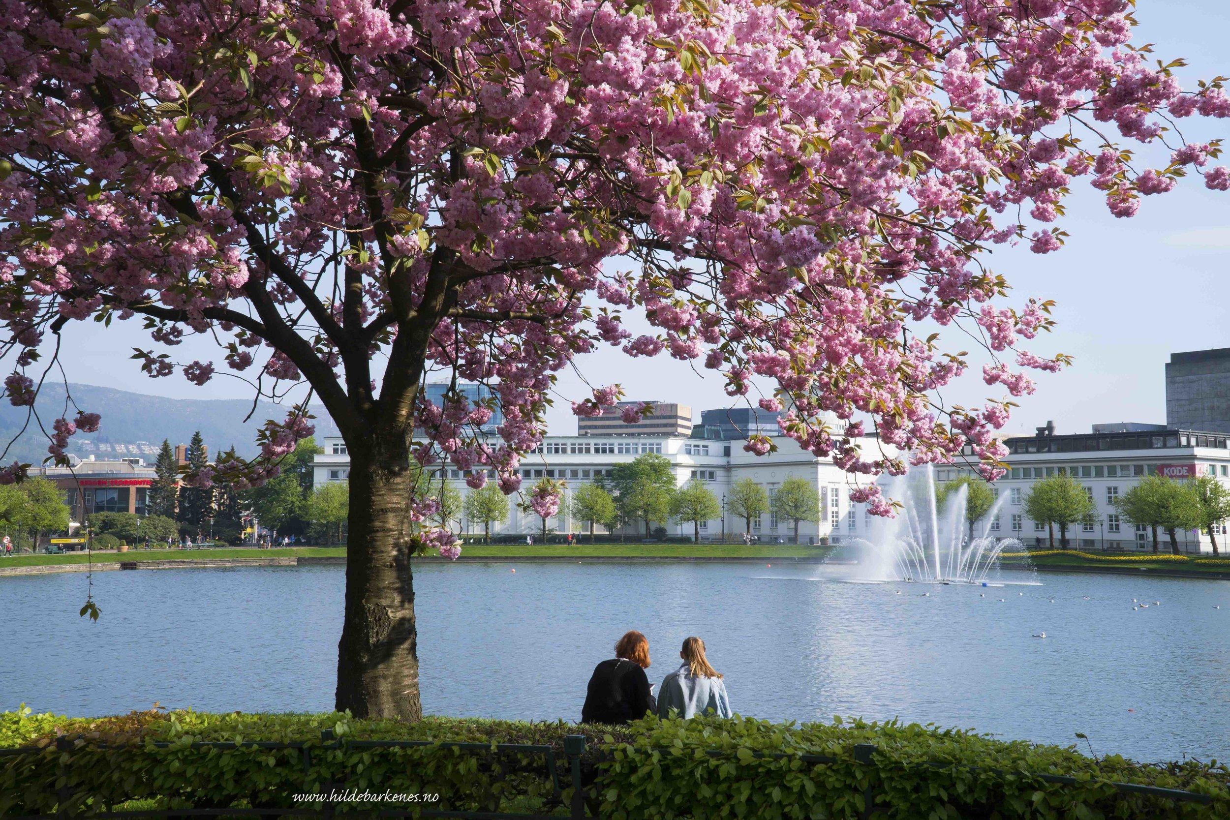BergenHildeBarkenes4.jpg