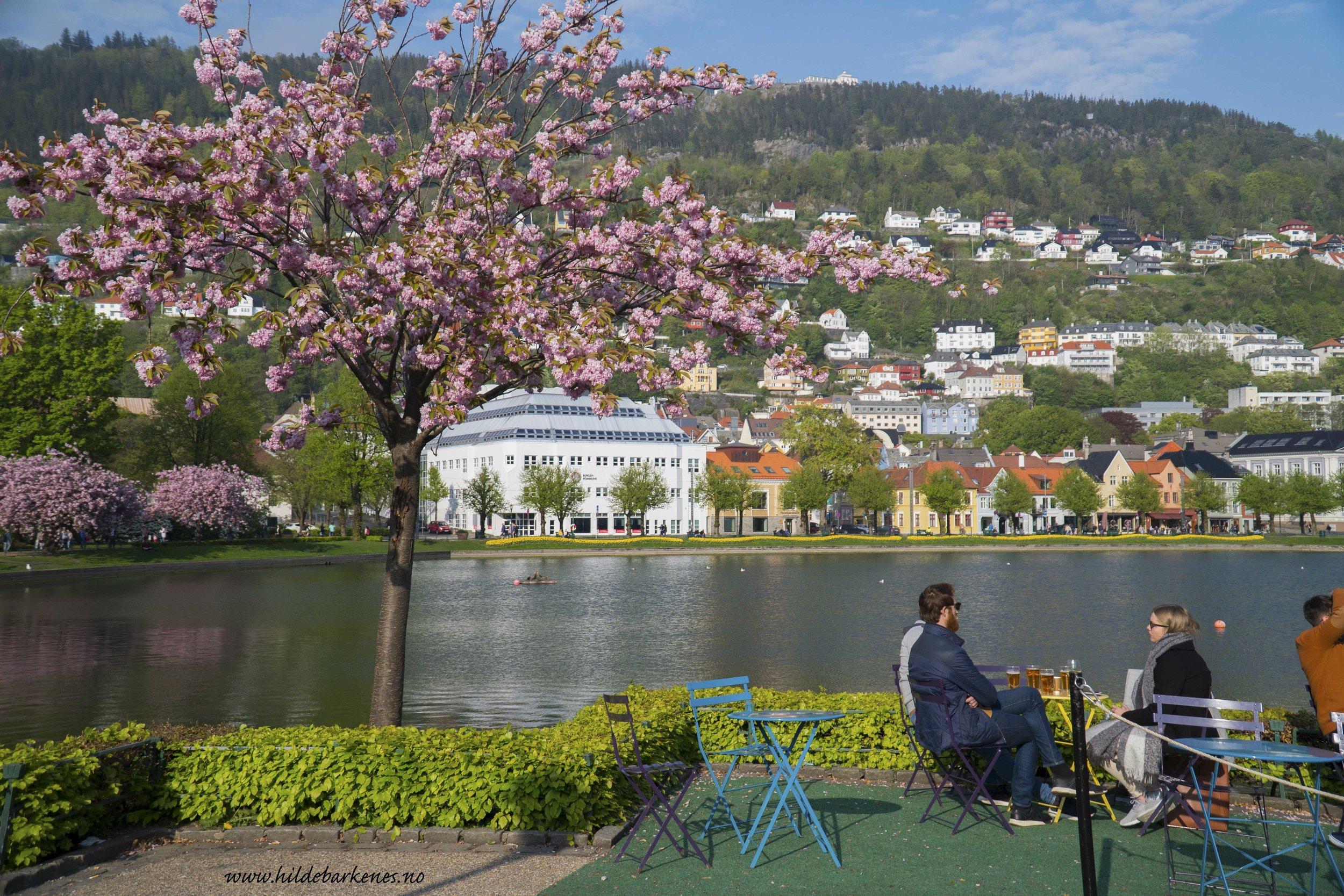 BergenHildeBarkenes8.jpg