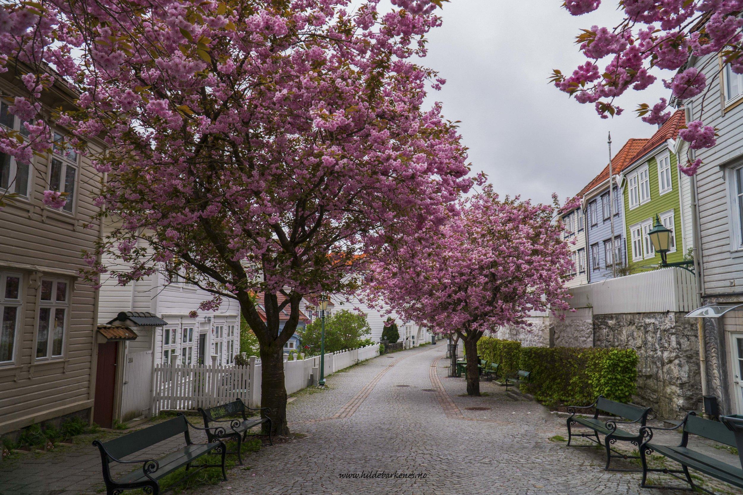 BergenHildeBarkenes28.jpg