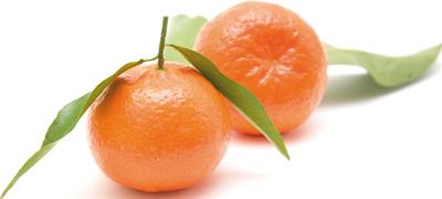 Clementine - Descrizione: Agrume invernale, frutto (esperidio) della pianta Citrus nobilis nobili della famiglia delle Rutacee. È simile all'arancia, ma più piccolo e dolce. I mandarini sono di taglia media, globosi e depressi ai poli, con buccia sottile non aderente alla polpa. La loro polpa, di color arancione, è formata da un grande numero di spicchi succosi e aromatici ricchi di semi. La parte commestibile è circa l'80% del frutto.Stagionalità: È un frutto invernale, la raccolta va da dicembre a marzo per la varietà tardiva. Il mese migliore è comunque gennaio.Proprietà: Il mandarino è il frutto fresco più ricco di zuccheri (oltre il 17%) e quindi di calorie. Questa caratteristica, associata all'indice di sazietà piuttosto basso, fa del mandarino un frutto di cui non abusare e di cui vanno valutate sempre le quantità assunte. È una buona fonte di vitamina C, anche se meno dell'arancia (40 mg contro 60), di potassio, calcio, fosforo e vitamina A. Hanno spiccata funzione dissetante.