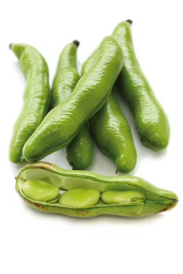 fava.png