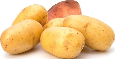 Patate - Descrizione: La patata è un tubero. Ha forma irregolare o tondeggiante, la buccia ruvida e la polpa soda o farinosa a seconda della varietà. Definito il