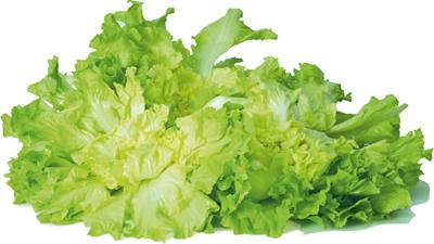 Indivia - Descrizione: Leindivie(Cichorium endivia), spesso confuse con le cicorie per ilsapore leggermente amaroma facilmente distinguibili per le foglie più glabre, sono insalate che appartengono alla famiglia delleComposite. Stagionalità: tutto l'anno a seconda del tipo Proprietà: Questa verdura viene apprezzata non tanto per le particolari qualità nutrizionali, quanto per le proprietà toniche, leggermente diuretiche (grazie ad un alto contenuto di acqua che supera il 90%) e lassative.L'indivia è un ortaggio molto poco calorico e croccante, capace di assorbire gli aromi degli alimenti con cui si cucina. Ha solo un punto debole: un leggero sapore amaro, soprattutto alla base, che è sufficiente eliminare per far sì che sia accettata anche dai bambini.