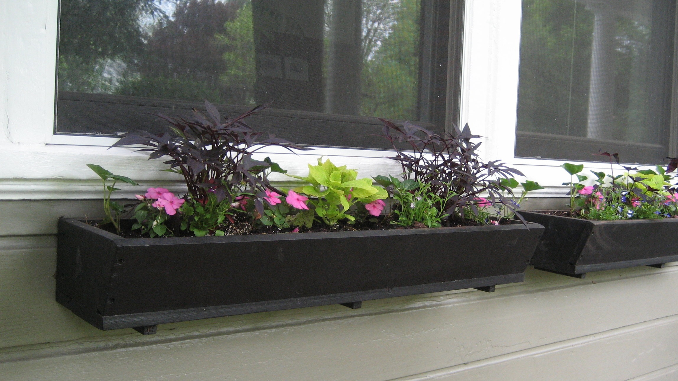freshly planted window boxes