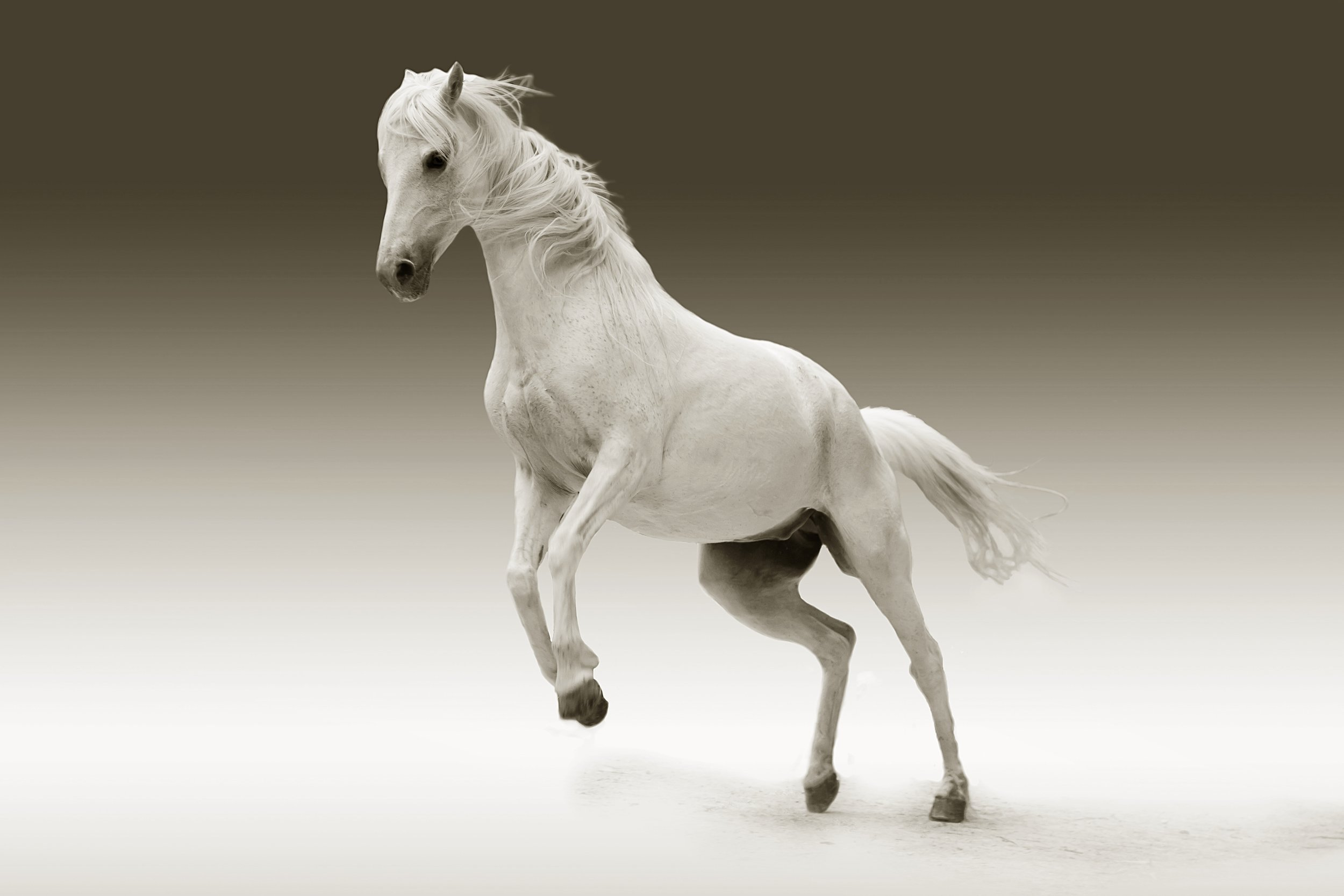 Grenzen - Mit dem Pferd die eigenen Grenzen erkennen und äussern