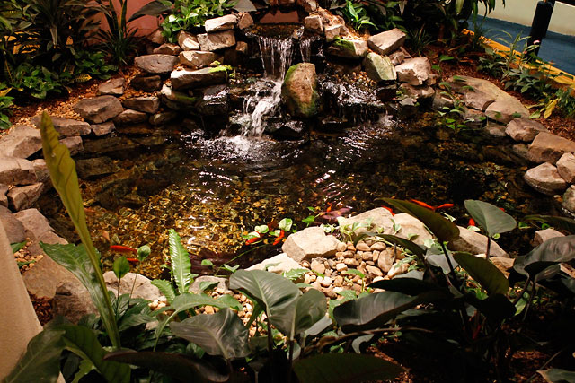 indoor-pond-fish-with-small-waterfall.jpg