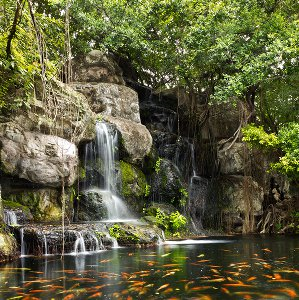 koi-pond-waterfall2.jpg