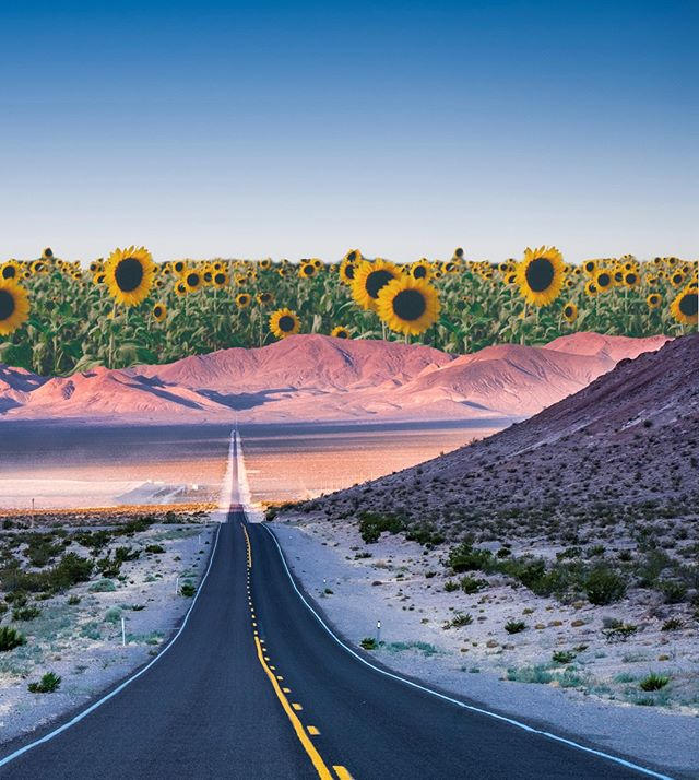 "we like to imagine ourselves coasting down a long empty road, windows down, towards a sunset of flowers. in our hand, a juicy jar of yog. ""here comes the sun"" softly plays on the radio. top down, spirits up ✨🌻"