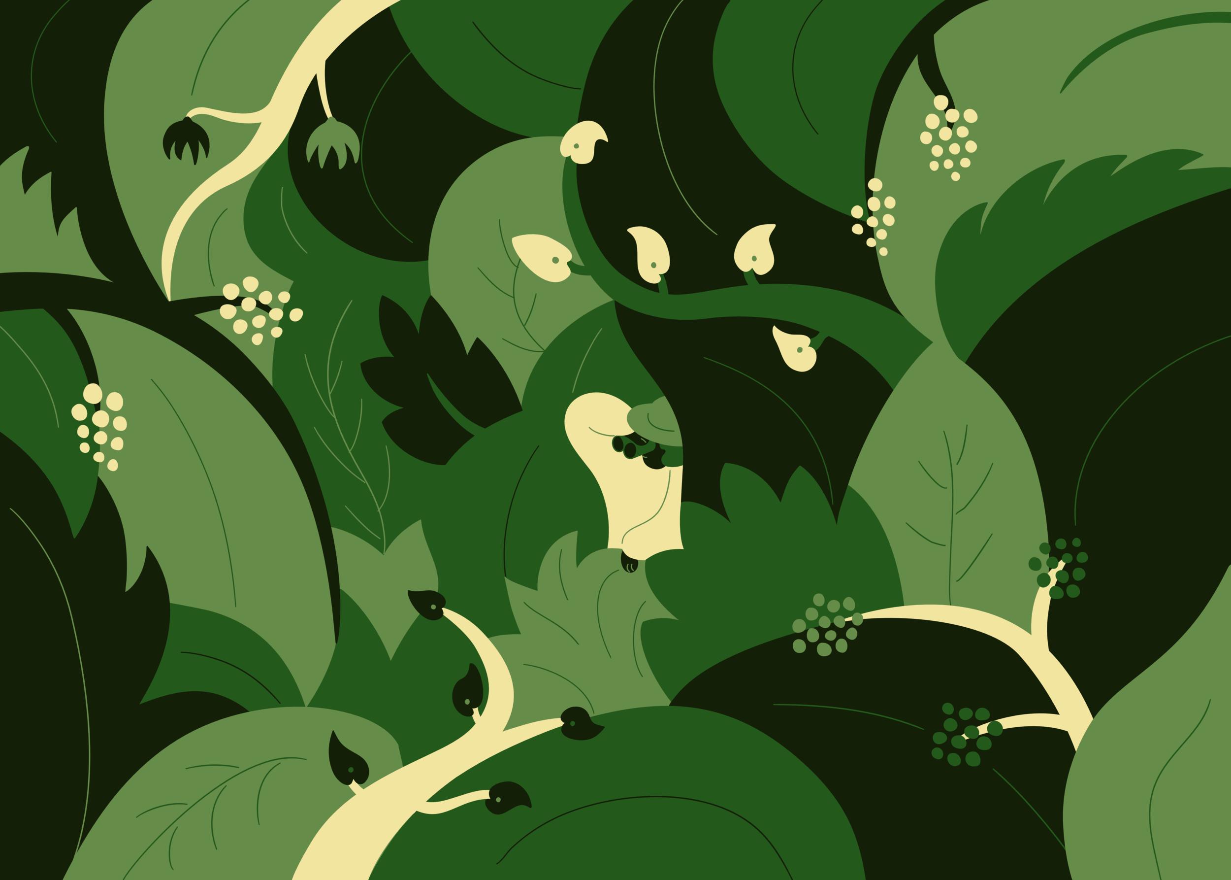 Jungle_web.png