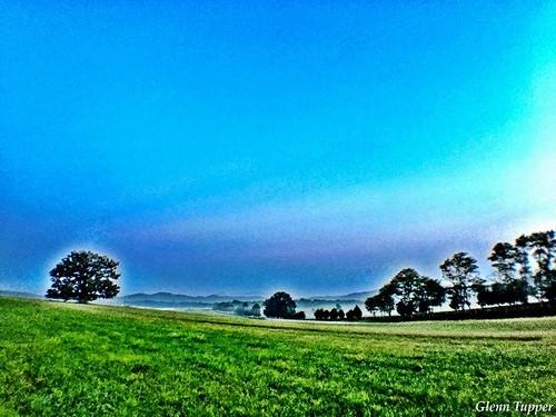 Oak Ridge Tree in the morning