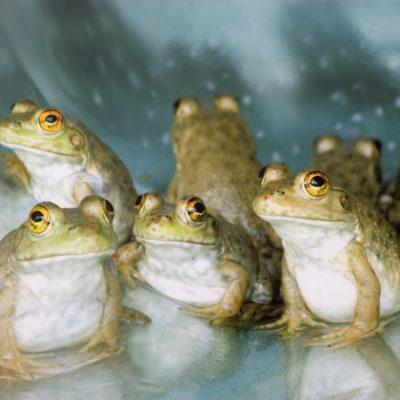 Ines E. Labunski Roberts, Frog Assembly, ink jet print, 2007