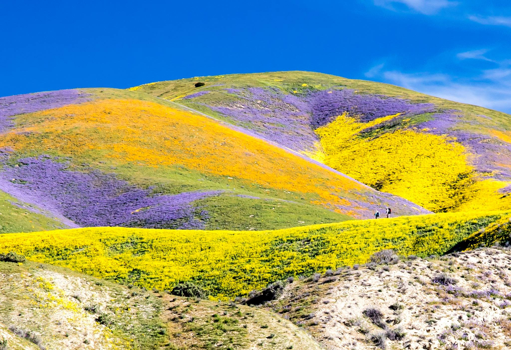 Superbloom_at_Carrizo_2017.jpg