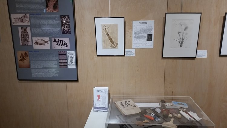 Prints from Land and Sea Exhibit Pic 4.jpg