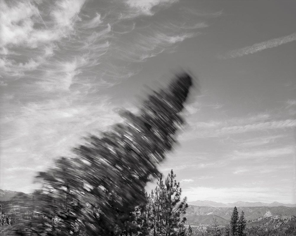 Falling Tree 3