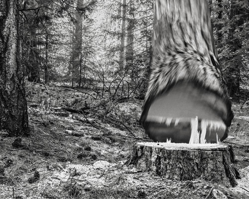 Falling Tree 26