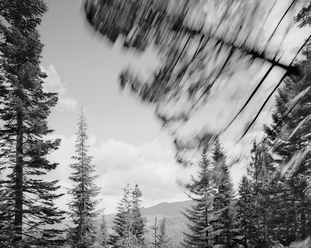 Falling Tree 2