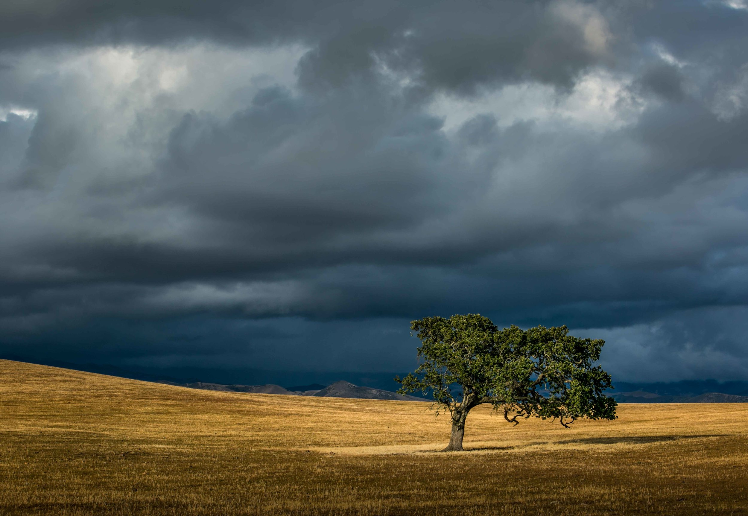George Rose,  Approaching Storm & Lone Oak, Camp 4 , Armour Ranch Road, Santa Ynez, California