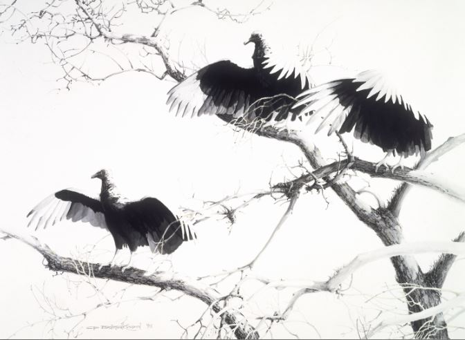 Agarrando La Mañana -- Black Vultures (1993)