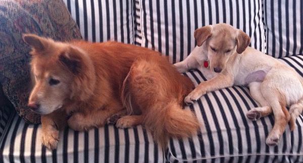 Sadie&Ella04