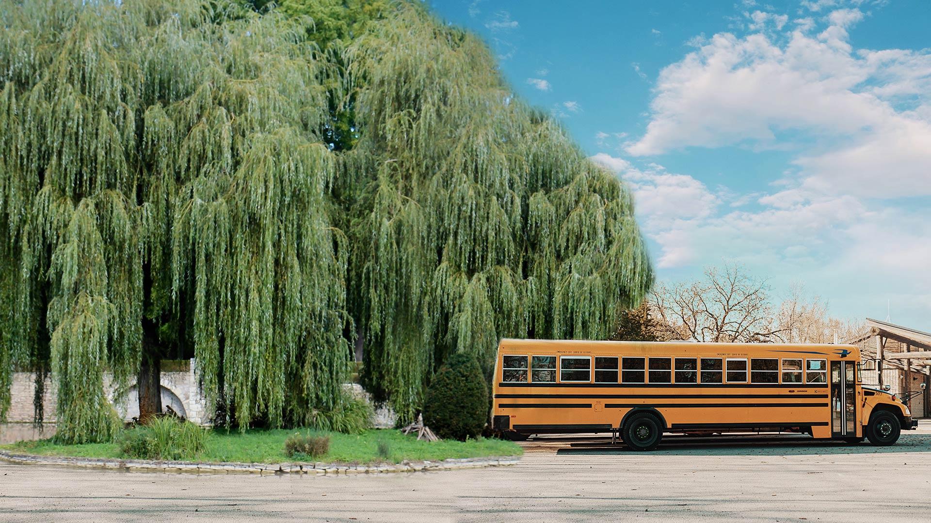 Willow-Grove.jpg