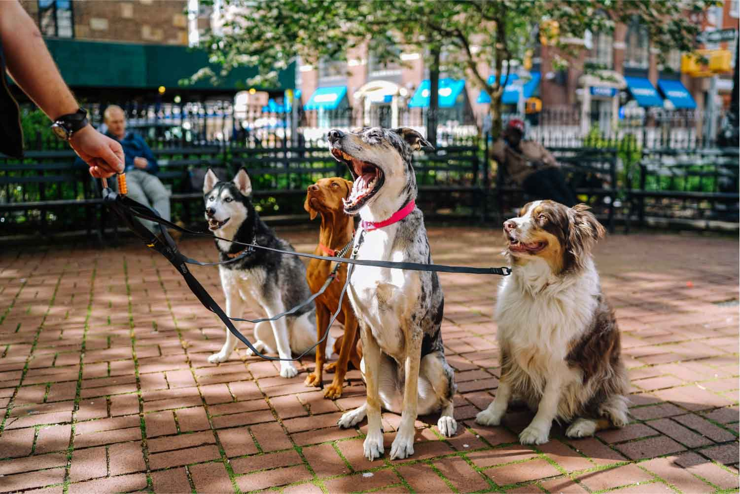 Dog Walking in NYC  Photo by  Matt Nelson