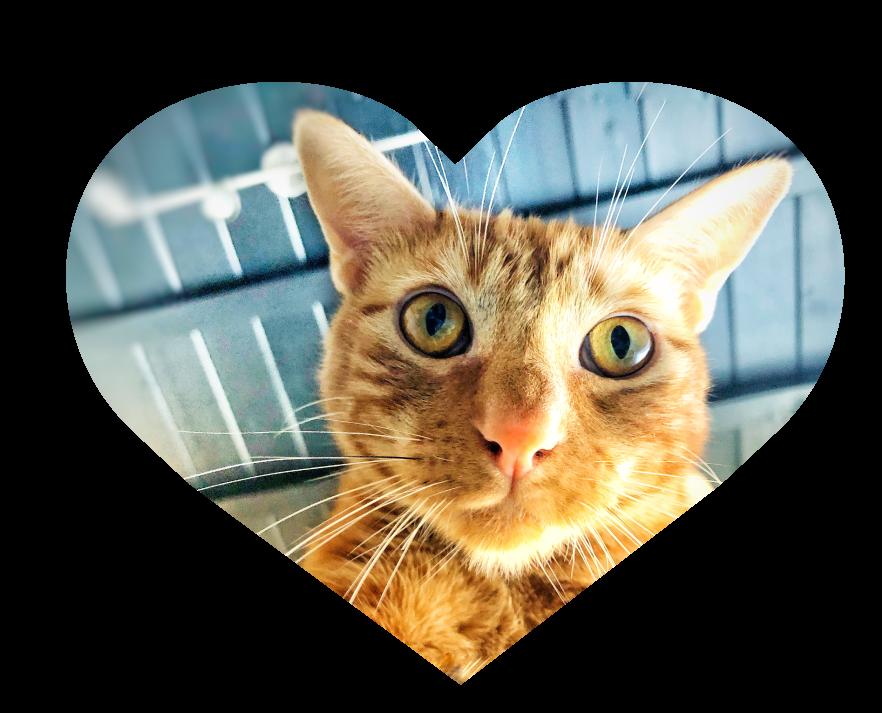 Cat Visits -