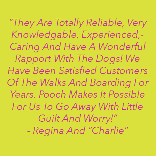 The Perfect Pooch NYC Reviews