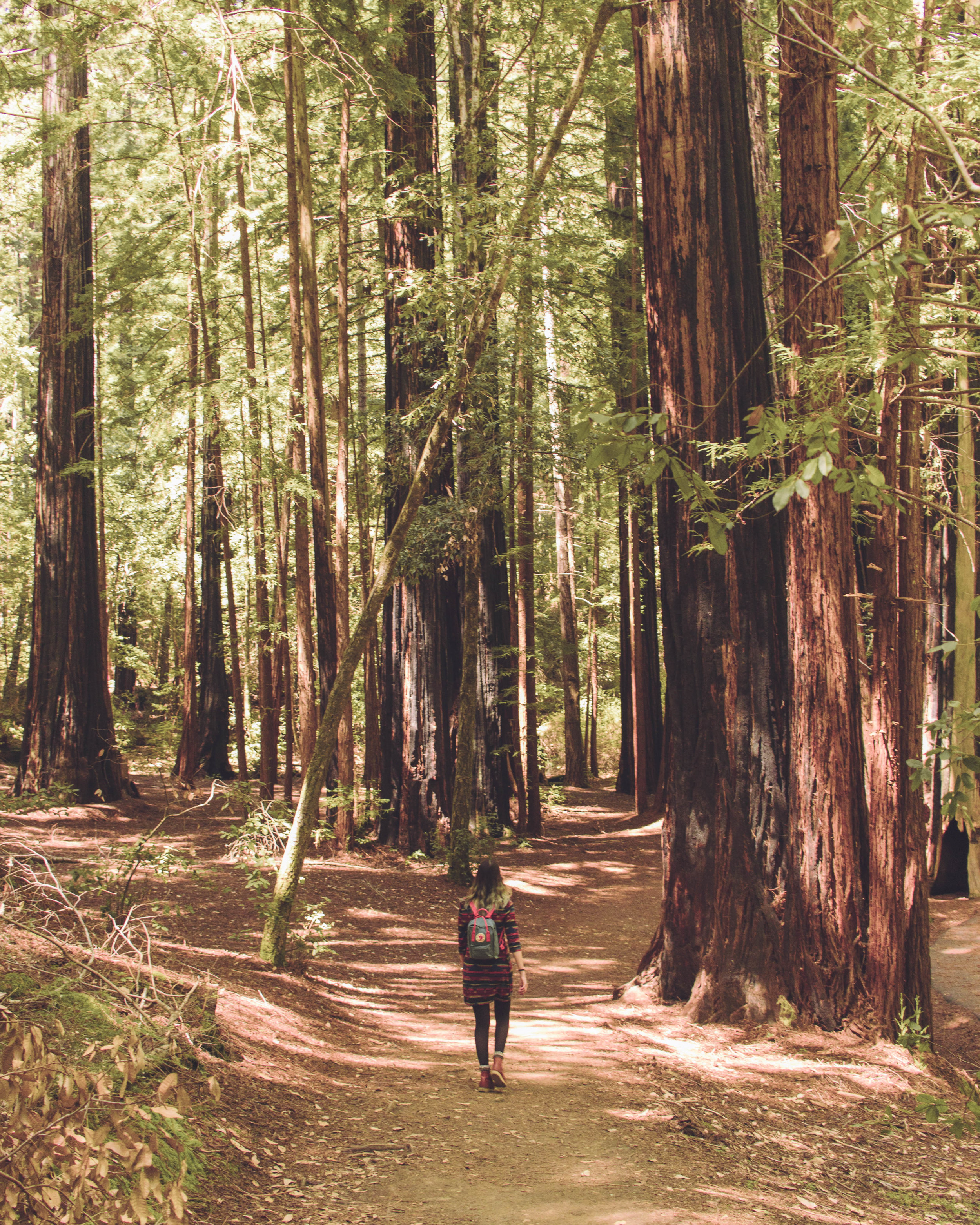 sequoia_trail