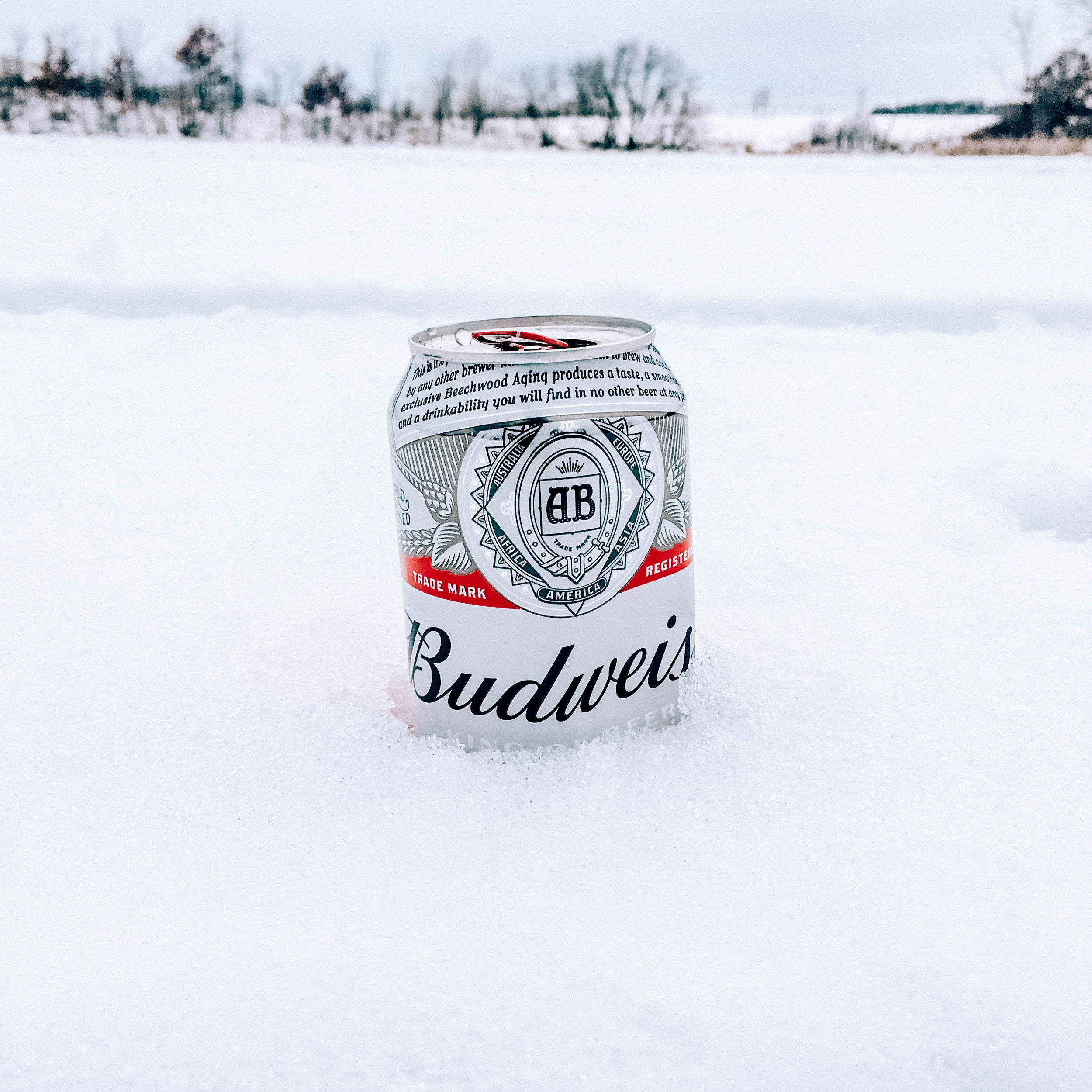 beer_in_snow.jpg