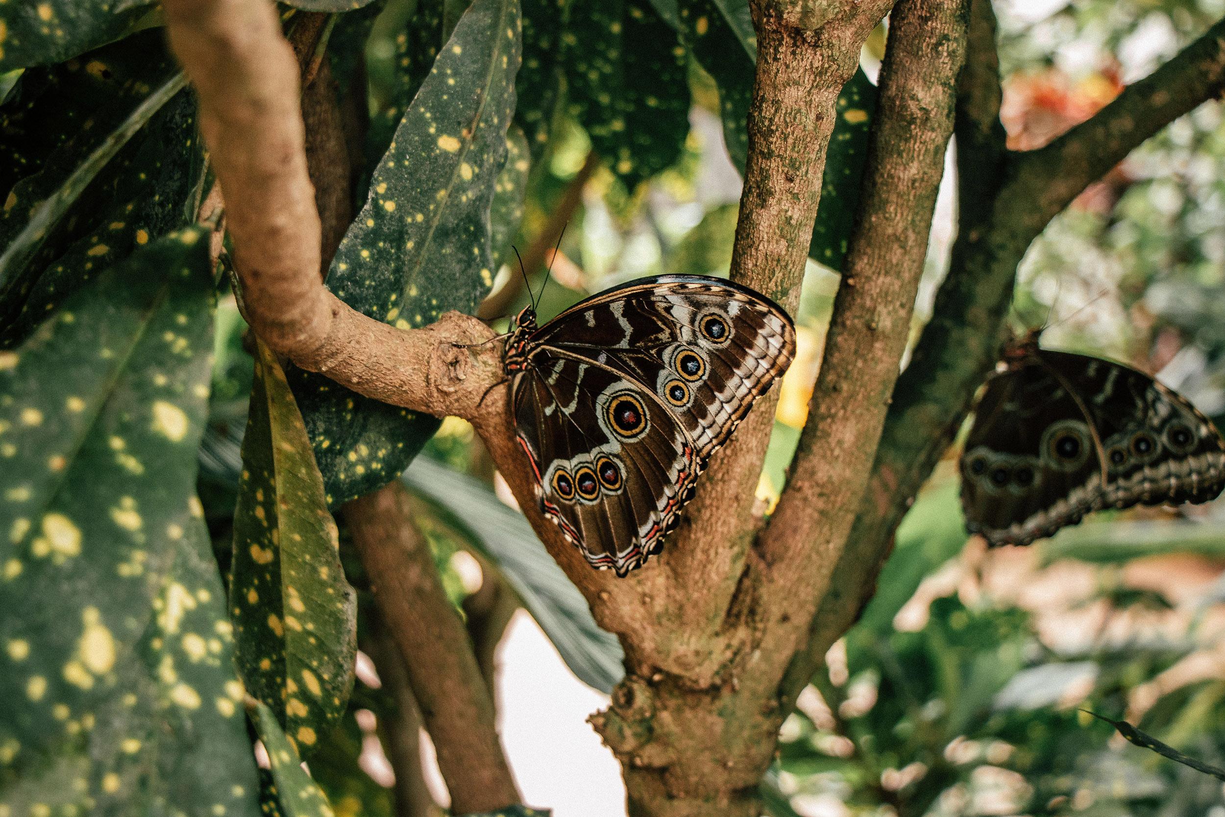 butterfly_house_3.jpg