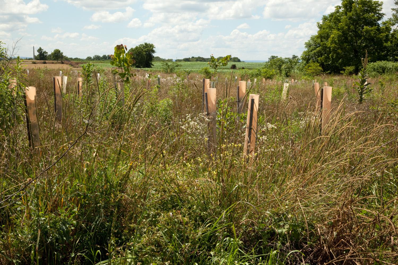 Miller's Cornfield, Antietam