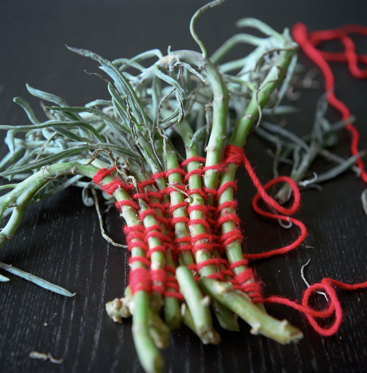 """Weaving Succulents"""