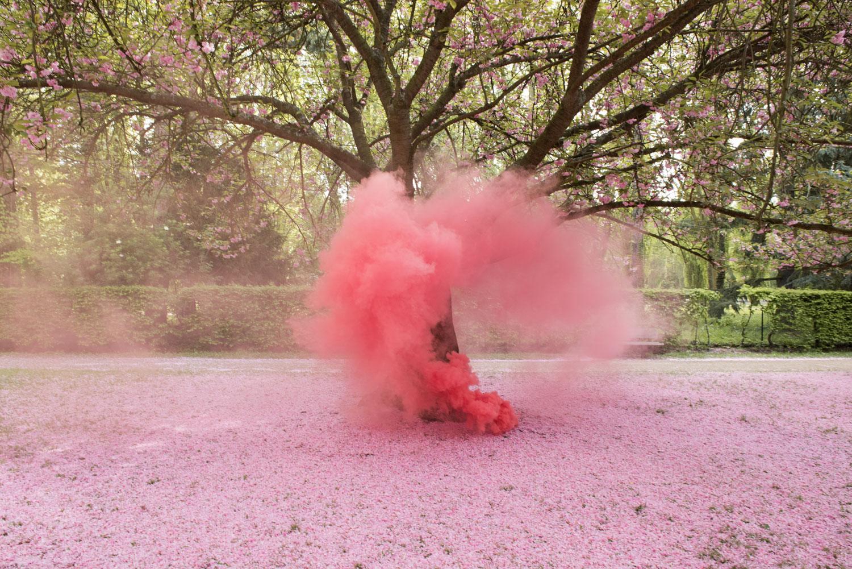 Blossom5.jpg