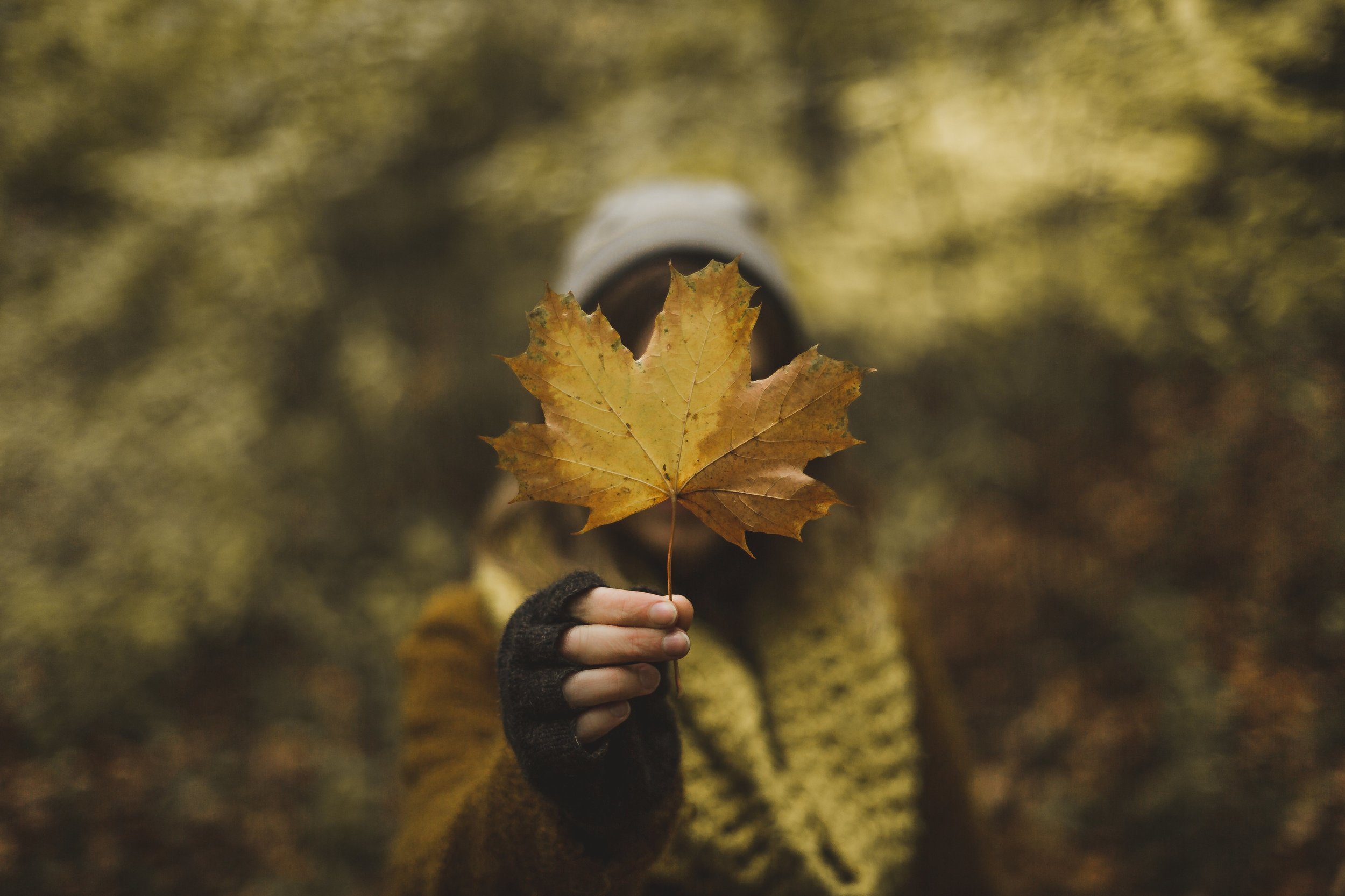 woman-holding-maple-leaf-in-fall_4460x4460.jpg
