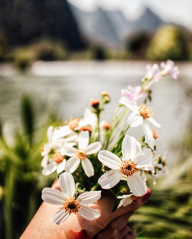 don't spend tons of money on fancy flowers from a shop, I'm just as happy with wildflowers by the river 🌺